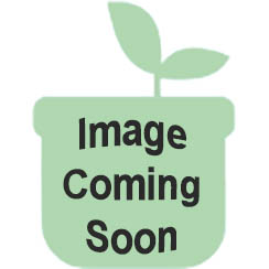 "Peerless Stove BJK5X0OP 24"" Sealed White Gas Range"